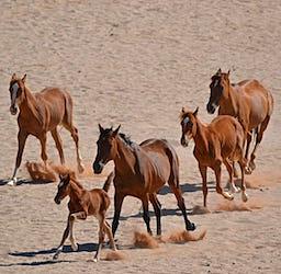 Unsere Spende für die Wilden Pferde Namibias